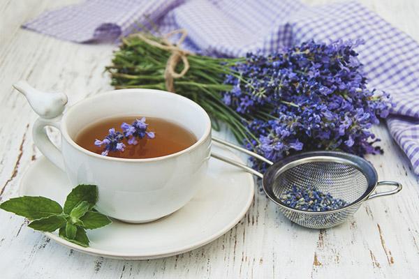 Trà hoa oải hương 1